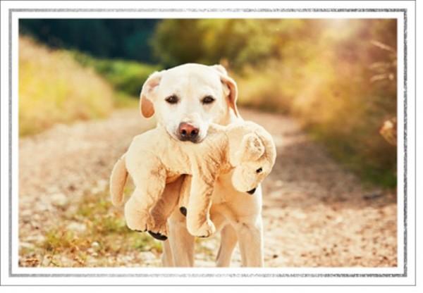 Umschlagk. LMA Labrador Teddy