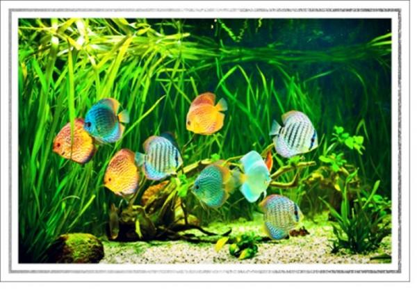 Umschlagk. LMA Fische Aquarium