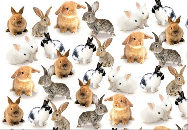 Rabbit Party 50x70