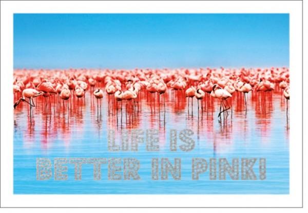 Umschlagk. LM Flamingos