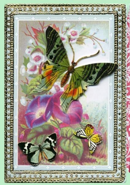 Umschlagk. Schmetterlinge
