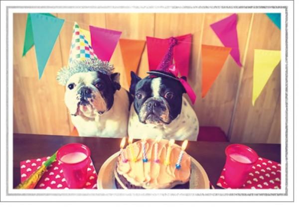 Umschlagk. LM Geburtstag Hunde