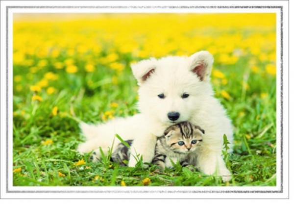 Umschlagk. LMA Welpe & Kätzchen