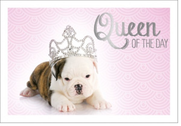 Umschlagk. LMA Queen of the day