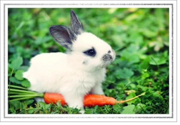 Umschlagk. LMA Kaninchen