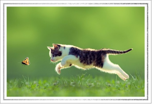 Umschlagk. LMA Kätzchen Schmetterling